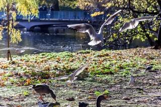 London November, 005