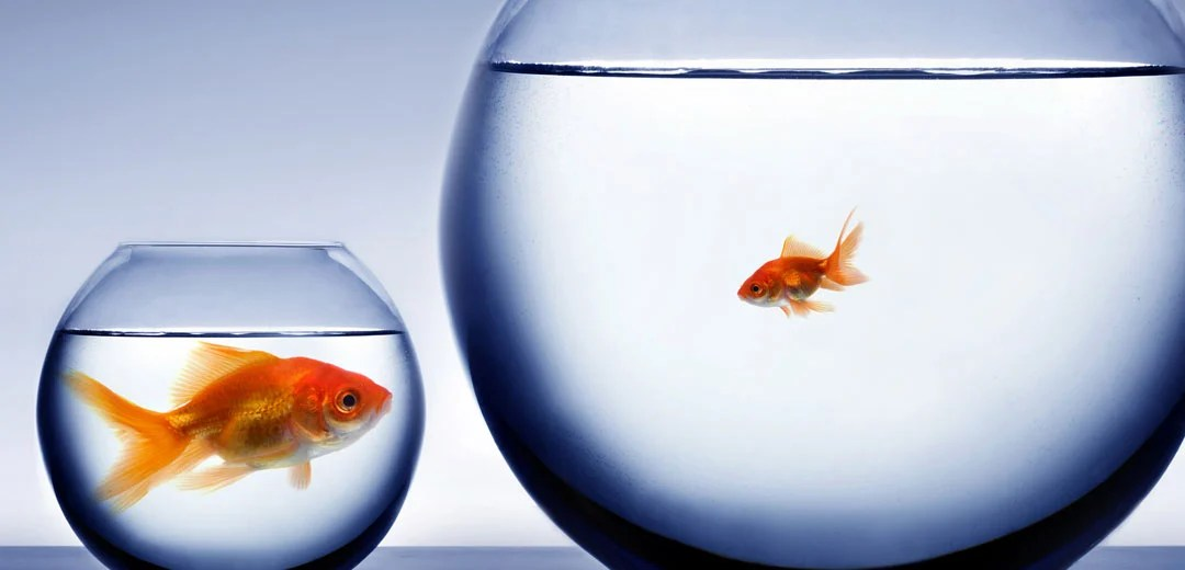 Big fish in a small bowl and a little fish in a big bowl