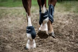 ThinLine Jump Schooling Horse Boot