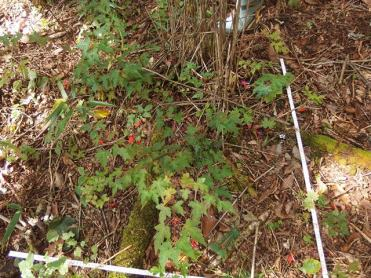 Demographic survey for tree seedlings