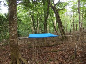 Trapping for insects