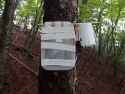 Acoustic monitoring for birds