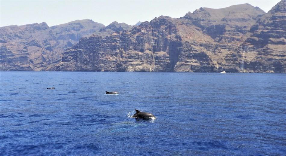 Segelausflug und Beobachtung der Wale und Delfine Teneriffa