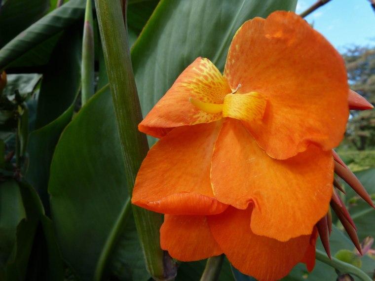 Tropical flower in Roatan, Honduras