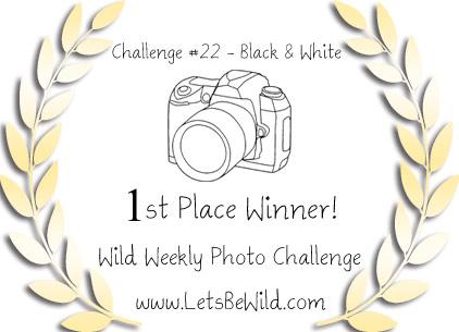 wild-winner-1st-22
