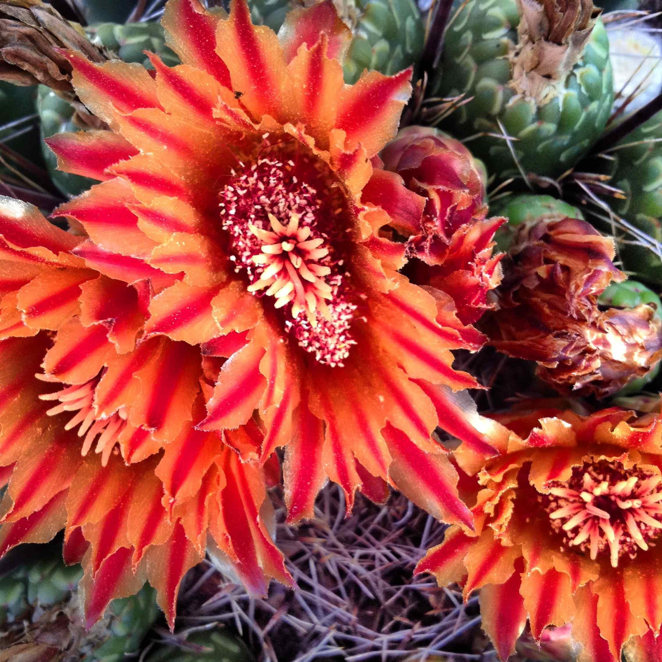Desert Flower Arizona