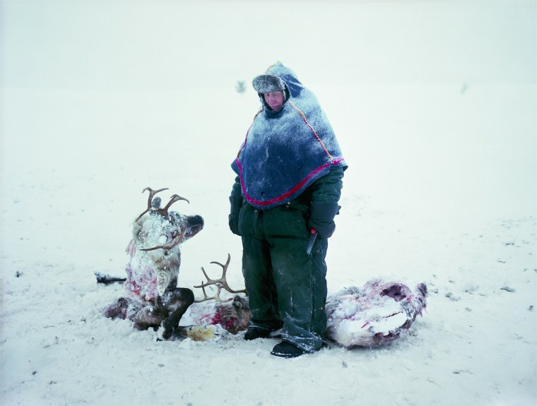 ERIKA LARSEN A Sami in Sweden mourns the loss of two reindeer that starved after locking horns in a fight for dominance. Photo credit: