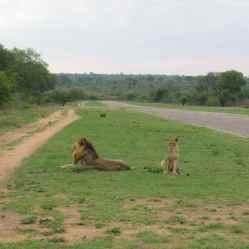 Tanda Tula Reserve South Africa