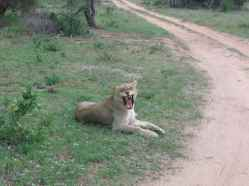 Tanda Tula Reserve South Africa