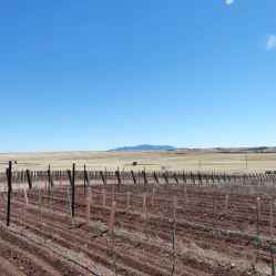 Dormant vineyards