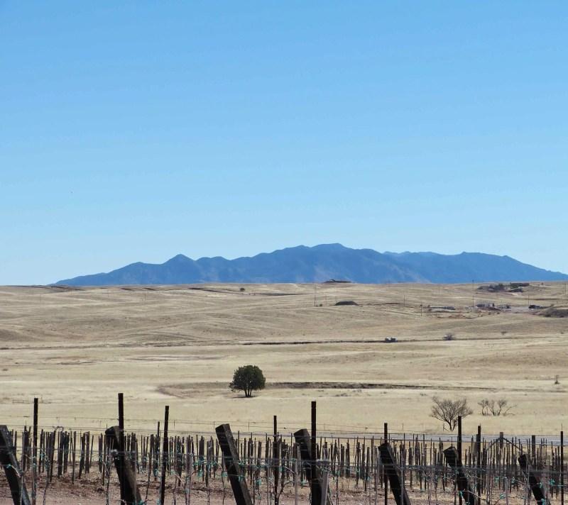 Sonoita Arizona wine country