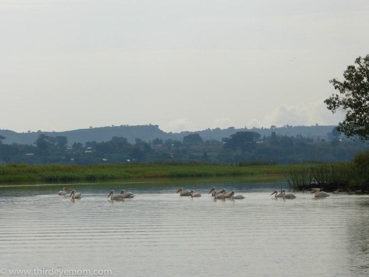 Lake Tana Bahir Dar, Ethiopia