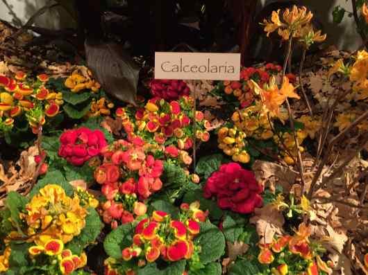 Macy's Flower Show Minneapolis MN 2015