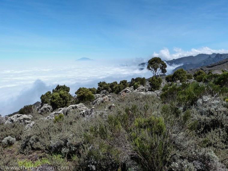 Shira Camp, Kilimanjaro, Tanzania