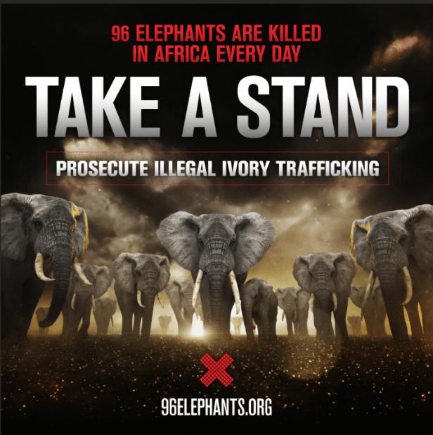 beherd 96 elephants are
