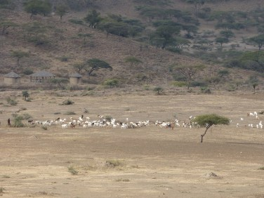 Mkuru Training Camp Arusha Tanzania