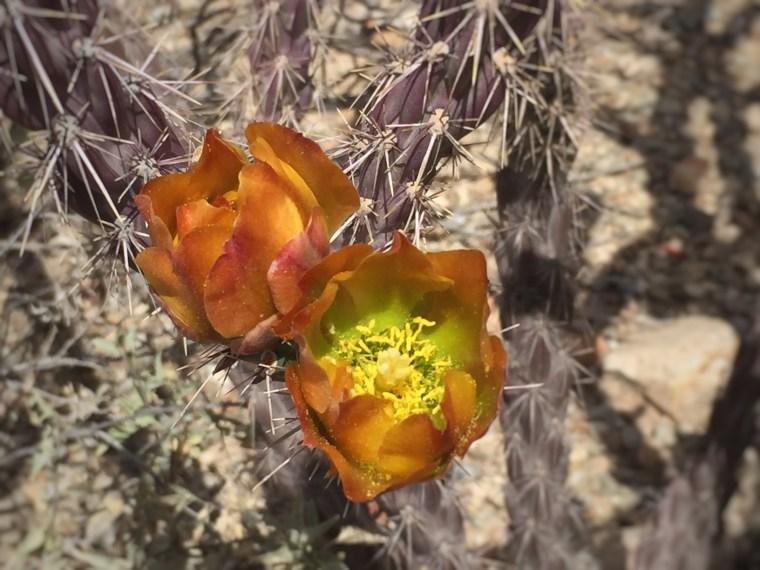 Sonoran Desert Musuem, Tucson Arizona