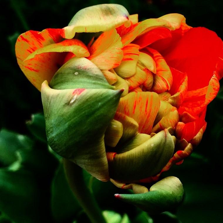 Minnesota Spring Flower