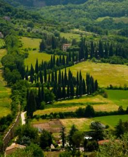 Cypress trees scenic. Orvieto, Umbria