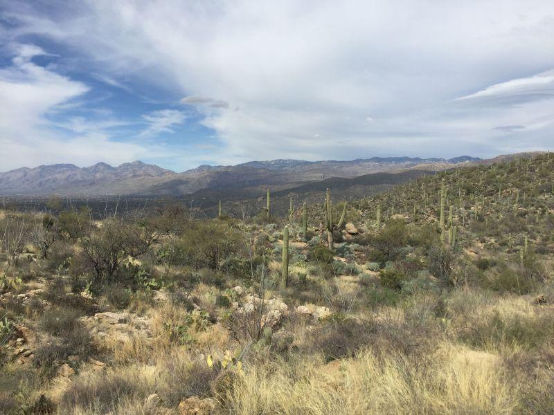 Saguaro National Park East, Tucson, Arizona
