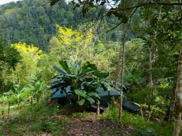 The jungle around dina's cabin