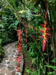 Rio Celeste Hideaway, Costa Rica