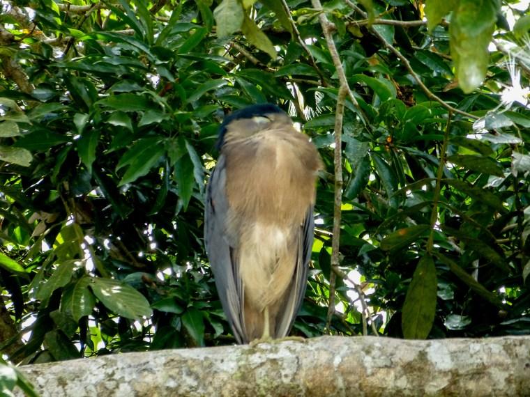 Caño Negro Wildlife Refuge, Costa Rica