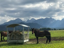 I loved the pastures and views of the mountains