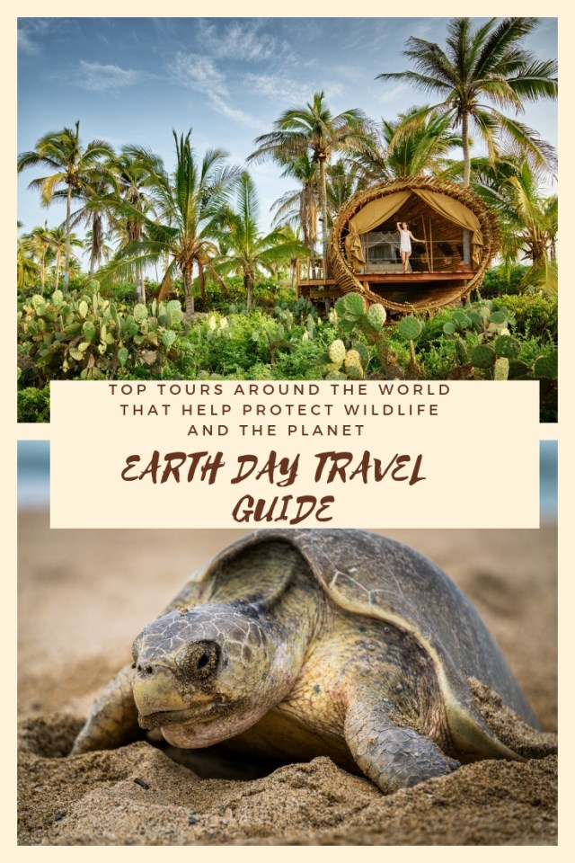 As travelers, we have a choice on how we spend our money and we can make a difference by supporting travel organizations that help protect the environment and its wildlife. Check out this guide of amazing tours that protect wildlife and the planet.