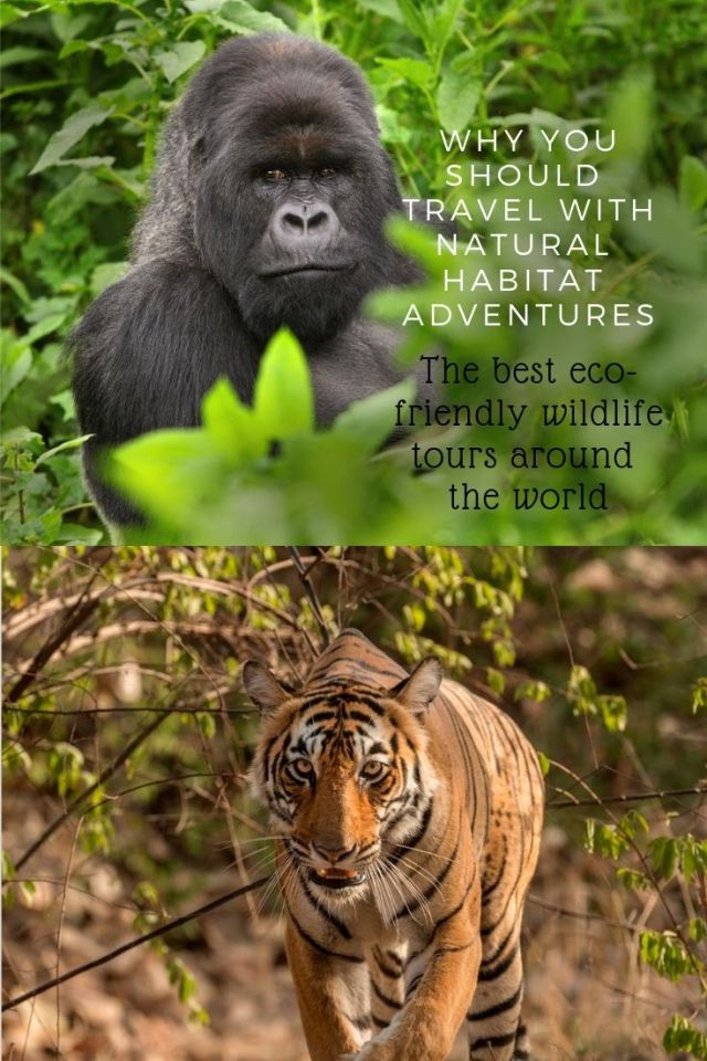 As the desire for up close and personal wildlife tours increases,concerns have grown about how to help protect animals in the wild especially in the face of climate change, irresponsible wildlife encounters, and an increase in poaching of certain species. Thankfully the demand for ethical wildlife tourism is on the rise andNatural Habitat Adventures, a global leader in responsible nature travel is helping pave the way.