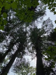 Estivant Pines Nature Reserve