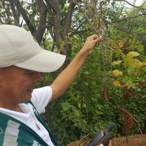 a man holding a branch from a palo santo tree