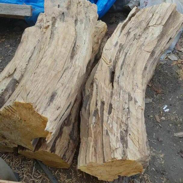 large logs of palo santo wood