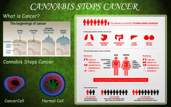Cannabis Cures Cancer The Science Behind Marijuana39s