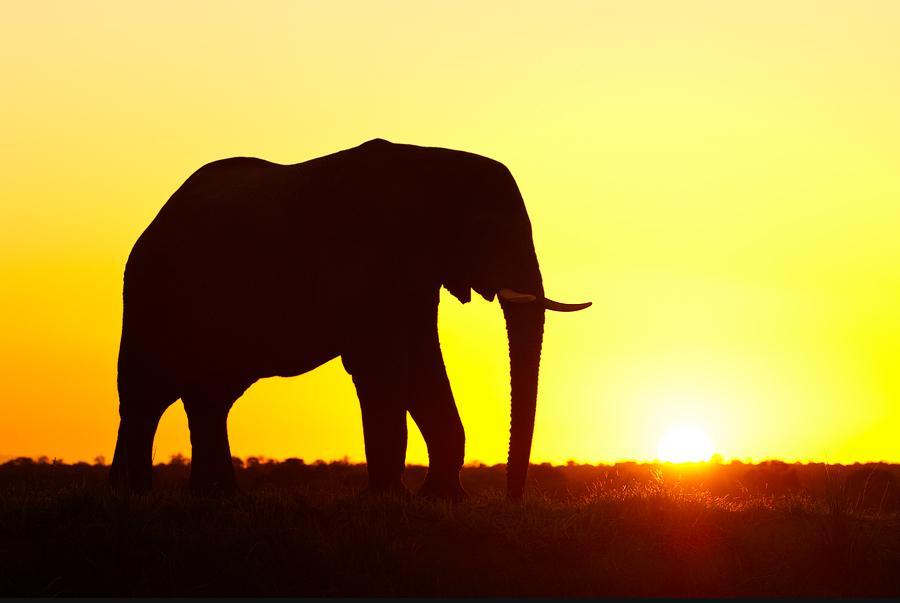 Animals Illuminated by Sunset Photo Gallery  Karma Jello
