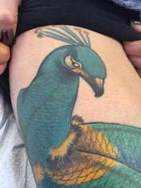 We tattooed this Peacock in Kelowna at the first studio on St. Paul St.