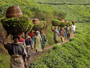 TEA Talk: Making Social Dialogue work for women workers