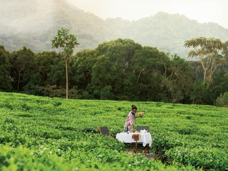TEA Talk: Can tea and forests healthily co-exist?