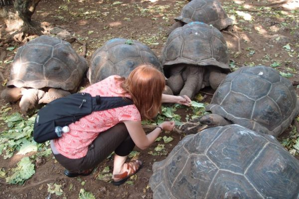 feeding the tortoises in zanzibar