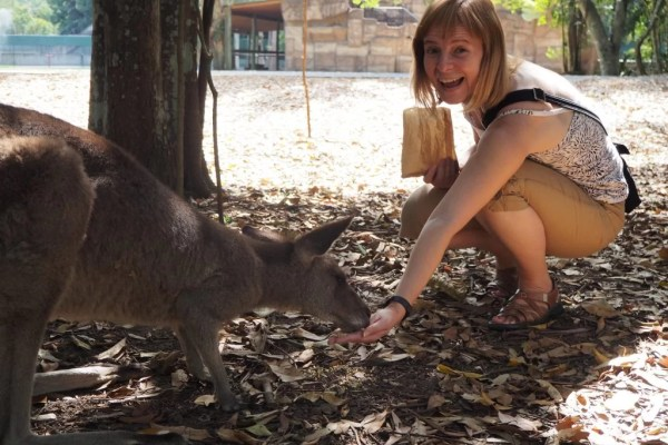 feeding kangaroos at Australia Zoo