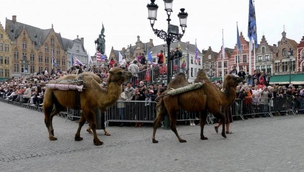 camels, procession of the holy blood, Bruges, Belgium
