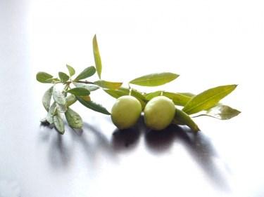 オリーブの天敵【オリーブアナアキゾウムシ】の対策法を徹底解説