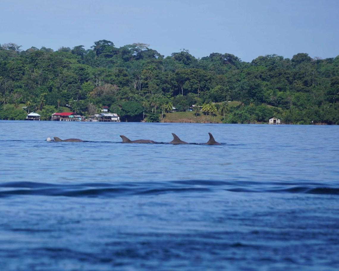 Dolphin Bay Bocas del Toro