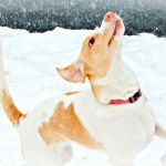 6 Fun Snow Games for Dogs