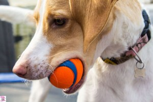 5 Reasons Why Playing Fetch Bonds You with Your Dog