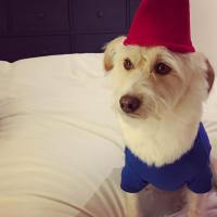 dog-gnome-costume