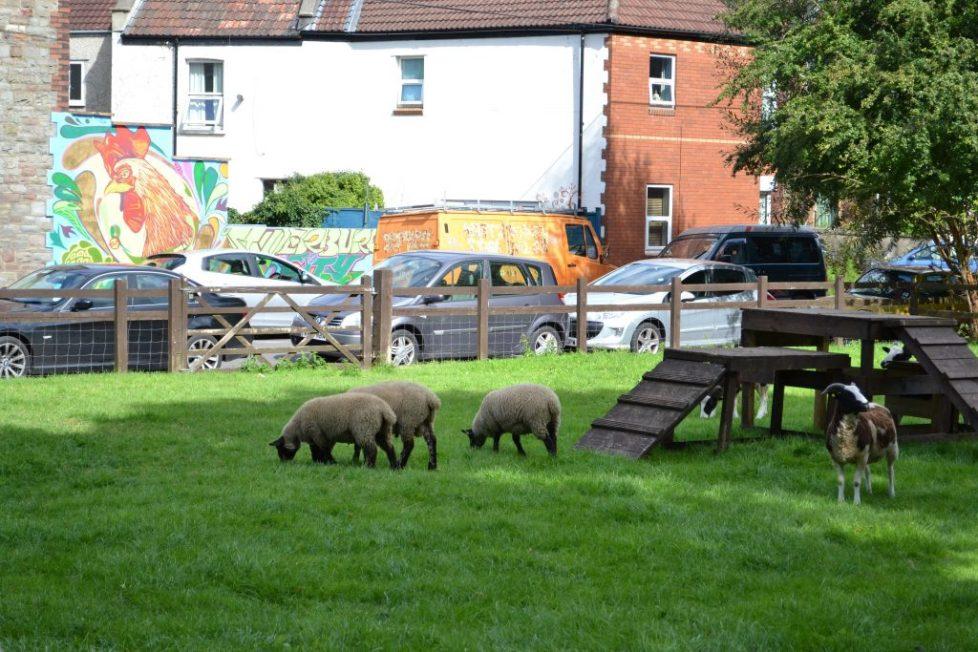 St werburghs city farm: Free activities in Bristol