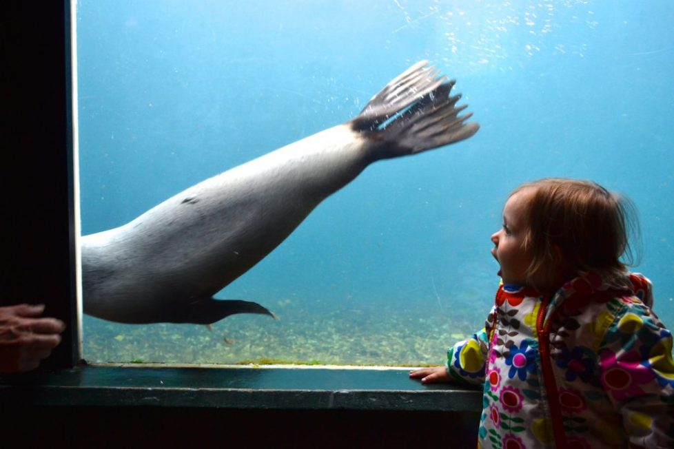 living sealife coasts aquarium devon torquay UK: Family-friendly things to do near Kingswear