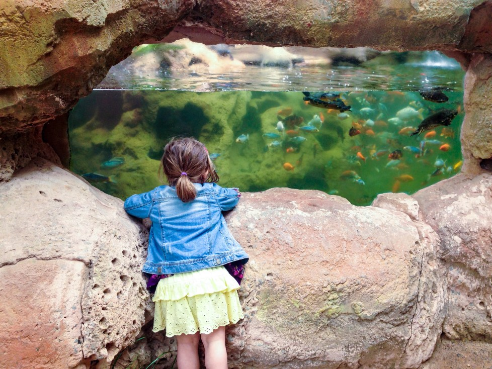 Rancho Texas Park, Canary Islands, What to do in Lanzarote when it rains