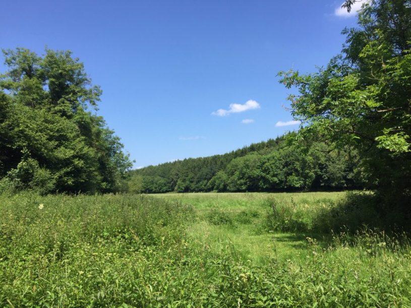 greyfield woods countryside near bristol